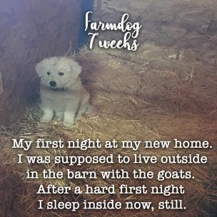 Farmdog7weeks