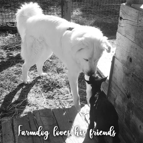 Farmdog&Friends