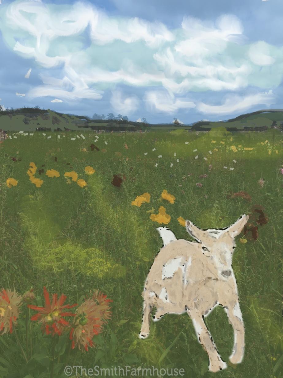 flowerfieldpage2
